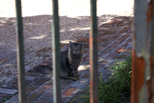 Magazine Street Cat, New Orleans, October 2011