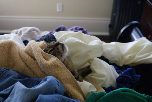 Isabel the Cat in a Laundry Pile - Image 2