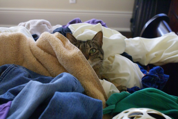 Isabel the Cat in a Laundry Pile - Image 3