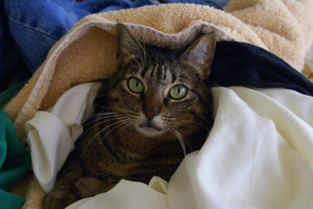 Isabel the Cat in a Laundry Pile - Image 4