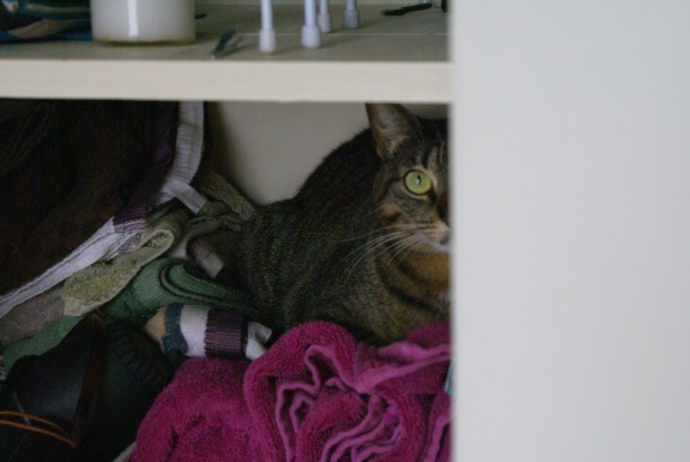 Isabel Cat Hiding in Linen Closet