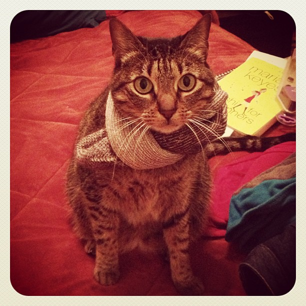 Izzy in a scarf