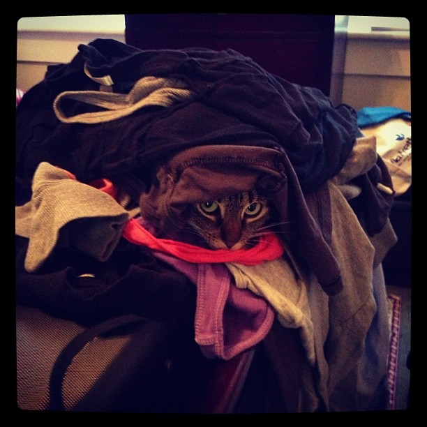 Izzy Loves Laundry