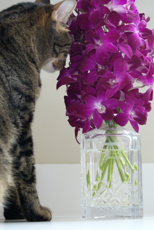 In 2011, The Man was away on assignment during my birthday, so he sent me flowers. (Shown here with a curious Munky.)