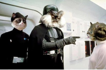 I also love Colonel Meow and Grumpy Cat (but who doesn't?)!