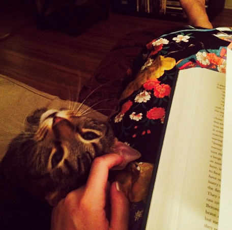 Cat, Kimono and Book